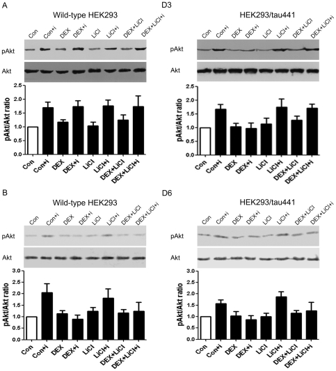 Effects of LiCl on the DEX-induced inhibitory effect. Both wild-type HEK293 and HEK293/tau441 cells were pre-treated with LiCl (10 mM, 1 h) and then treated with DEX for 3 days (D3; A) or 6 days (D6; B), followed by stimulation of insulin and Western analysis of <t>pAkt</t> and <t>Akt.</t> Bars representing means ± SEM. Pre-treatment with LiCl prevented the inhibitory effect of DEX in HEK293/tau441 cells on D3.