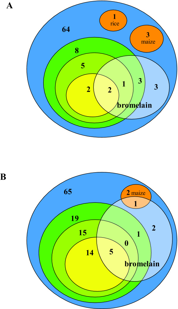 Cluster diagrams showing the distribution of positives to bromelain . Positives to bromelain are shown in the white shaded circles. Colour codes are as in Figure 3. A . Immulite. B . ImmunoCAP.