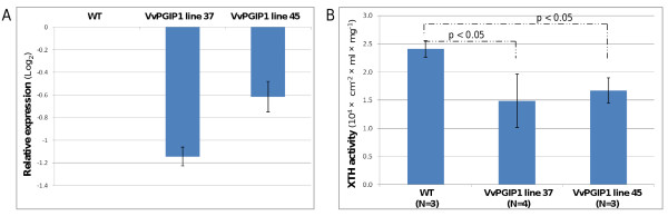 Expression and activity of XTH . a . Expression of Nicotiana tabacum <t>xyloglucan</t> endotransglycosylase (XTH, Genbank Acc AB017025.1 ) in Vvpgip1 lines 37 and 45 relative to the untransformed control (WT). Standard deviation of the mean relative expression of four technical repeats per plant line is shown with error bars . b . Total XTH activity in tobacco leaves determined by a dot-blot enzyme activity assay. Leaves representing leaf position 3 was used for the assay. A two-tailed Student's t-test showed that p