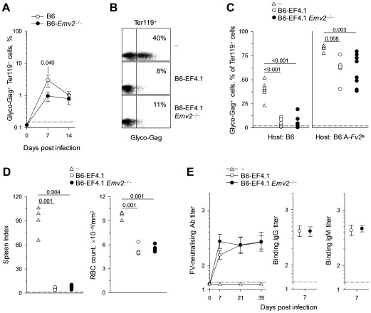 Emv2 -selected CD4 + T cells retain full antiviral activity. (A) Mean frequency (± SEM, n = 8–19) of FV-infected (glyco-Gag + ) Ter119 + cells in the spleens of FV-infected B6 or Emv2 -deficient B6 mice (B6- Emv2 −/− ). (B–C) CD4 + T cells isolated from either B6 (B6-EF4.1) or Emv2 -deficient B6 (B6-EF4.1 Emv2 −/− ) EF4.1 mice were adoptively transferred into B6 or B6.A- Fv2 s recipients that were infected with FV the same day and analyzed 7 days later. (B) Flow cytometric example of FV-infected Ter119 + cells from B6 recipients and (C) frequency of FV-infected cells in Ter119 + cells from the spleens of B6 or B6.A- Fv2 s recipients of CD4 + T cells. Control B6 and B6.A- Fv2 s mice that received no CD4 + T cells (-) are also included. Each symbol is an individual mouse. (D) Spleen index ( left ) and RBC count ( right ) of B6- Rag1 −/− Fv2 s mice that were infected with FV and either received the same day CD4 + T cells isolated from either B6 (B6-EF4.1) or Emv2 -deficient B6 (B6-EF4.1 Emv2 −/− ) EF4.1 mice or no cells (-). Each symbol is an individual mouse analyzed 3 weeks post infection. (E) Titers of FV-neutralizing antibodies during the course of FV infection ( left ) and titers of F-MLV-infected cell-binding IgG ( middle ) and <t>IgM</t> ( right ) 7 days post FV infection, in the sera of B6- Tcra −/− mice that either received CD4 + T cells isolated from either B6 (B6-EF4.1) or Emv2 -deficient B6 (B6-EF4.1 Emv2 −/− ) EF4.1 mice or no cells (-) the day of the infection. Dashed lines represent the limit of detection. Data are the means ± SEM ( n = 11–12) from 2 experiments.