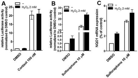 Influence of oxidative stress on Nrf2 pathway and GR transactivation. The activation of the GR-dependent TAT3-TATA-reporter by 100 µM cortisol was measured in rat H4IIE hepatoma cells with endogenous GR expression ( A ). CMV-LacZ plasmid served as transfection control to normalize luciferase values. Cells were treated with vehicle (DMSO) or cortisol (100 µM), with or without H 2 O 2 (2 mM) for 24 h at 37°C. Data represent mean ± SD from at least three independent experiments performed in triplicate. The influence of oxidative stress induced by H 2 O 2 on Nrf2-dependent transactivation was measured in ARECS3 cells stably expressing the ARE8L-reporter ( B ). Cells were treated with vehicle (DMSO) or sulforaphane (10 µM) in the presence or absence of H 2 O 2 (2 mM) for 24 h. Data represent mean ± SD from three independent experiments measured in triplicate. Activation of NQO1 mRNA expression by H 2 O 2 was measured in H4IIE cells ( C ). Cells were incubated for 24 h at 37°C with vehicle (0.05% DMSO) or sulforaphane (10 µM) in the presence or absence of H 2 O 2 (2 mM), followed by determination of NQO1 mRNA levels by real-time RT-PCR. Data (mean ± SD from two independent experiments measured in triplicate) represent ratios of NQO1 mRNA to GAPDH control mRNA from treated cells normalized to the values obtained from cells incubated with vehicle (DMSO).