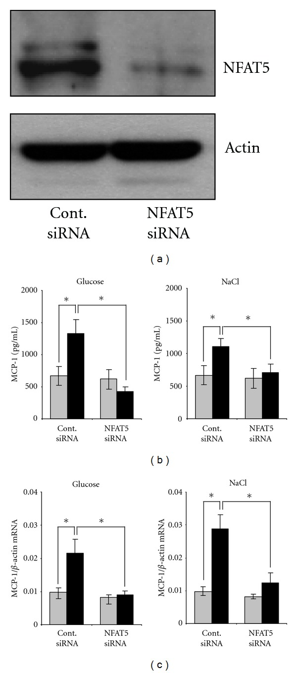 NFAT5-knockdown attenuates osmolality-induced MCP-1 expression. Met5A cells were transfected with <t>siRNA</t> constructs for NFAT5 or with <t>nontargeting</t> siRNA as control as indicated. Cells were kept in isosmotic medium (gray column; 300 mosm/kg H 2 O) or were exposed to hyperosmotic medium (black column; 400 mosm/kg H 2 O). Medium osmolality was elevated by addition of glucose or NaCl as indicated, and cells were incubated for 24 h. (a) To demonstrate efficiency of NFAT5 knockdown, cells were processed for immunoblotting as described in Section 2 . To demonstrate comparable protein loading, the blots were also probed for actin. (b) For determination of MCP-1 secretion, medium samples were collected and the concentration of MCP-1 in the cell culture supernatant was determined by ELISA as described in Section 2 . Means ± SEM for n = 4 per point; * P