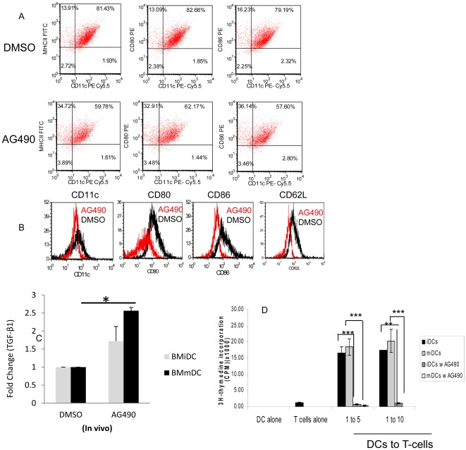AG490 modulates phenotype and function of DC. A - Dendritic cells were generated from bone marrow of NOD mice treated either with AG490 or DMSO as described in materials and methods and stained directly with CD11c, MHC II, CD80 and CD86. Data shown represents CD11c gated population of pool fresh purified immature CD11c of AG490 and DMSO treated mice. B- Histograms represent expression of CD11c, CD86, CD80 and CD62L on gated CD11c population of mice treated with AG490 or DMSO in vivo . C- Bone marrow cells were isolated from NOD mice treated with AG490/DMSO for 5 weeks and then differentiated into DC in vitro as described. Total <t>RNA</t> (200 ng) of DC was converted into <t>cDNA</t> and then expression of Tgf-β1 was measured by Real-Time TaqMan Gene expression assays (Applied Biosystems). Data represents the mean (fold change) of two real-time RT-PCR experiments and the bars represent standard deviation of the mean. Fold change of Tgf-β1expression is shown (n = 5 mice/group, * p = 0.02). D- BMDCs were generated from BALB/c mice treated in vitro with 20 µM AG490 or DMSO for 12 hrs and then co-cultured with constant numbers of CD4+CD25− T-cells (1×10 5 ) with soluble anti-CD3 (2.5 ng/ml) for 72 hrs. Incorporation of 3 H-thymidine was measured in the last 16 hr of cell culture. Experiment was performed in triplicate format and repeated at least twice. Data analysis was performed using the student t -test and p value≤0.05 considered significant. Bars represent deviation of the mean (* p = 0.002, **p = 0.0002; ***p = 0.001). [Figures A B are intended to be in color online and black and white in print].