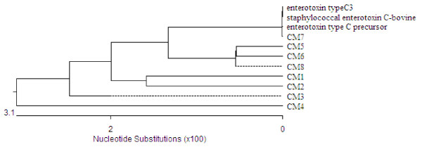 Phylogenetic tree of sec genes from eight Staphylococcus aureus isolates from goats with mastitis . The tree was constructed using the Megalign program of the Lasergene software. Scale bar represents number of nucleotide substitutions per? bases.