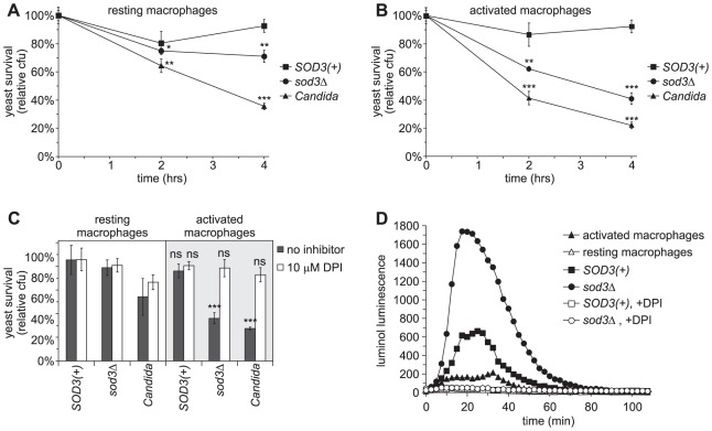 Sod3 protects Histoplasma yeasts from ROS produced by activated macrophages. ( A–B ) Survival of yeasts after infection of resting ( A ) or cytokine-activated ( B ) murine macrophages. SOD3(+) (OSU45), sod3Δ (OSU15) and Candida albicans yeasts were added to resident peritoneal macrophages at an MOI of 1∶50. Yeast survival was determined by enumeration of viable cfu after 2 and 4 hours of co-incubation of yeasts with macrophages at 37°C. In ( B ), 10 U <t>TNFα</t> and 100 U IFNγ were added to macrophages 24 hours prior to infection to enhance ROS production. Results are plotted as relative yeast survival (mean ± standard deviation of 3 replicates) compared to viable cfu of yeasts incubated in the absence of macrophages. Significantly decreased survival compared to SOD3(+) yeasts is indicated by asterisks (* p