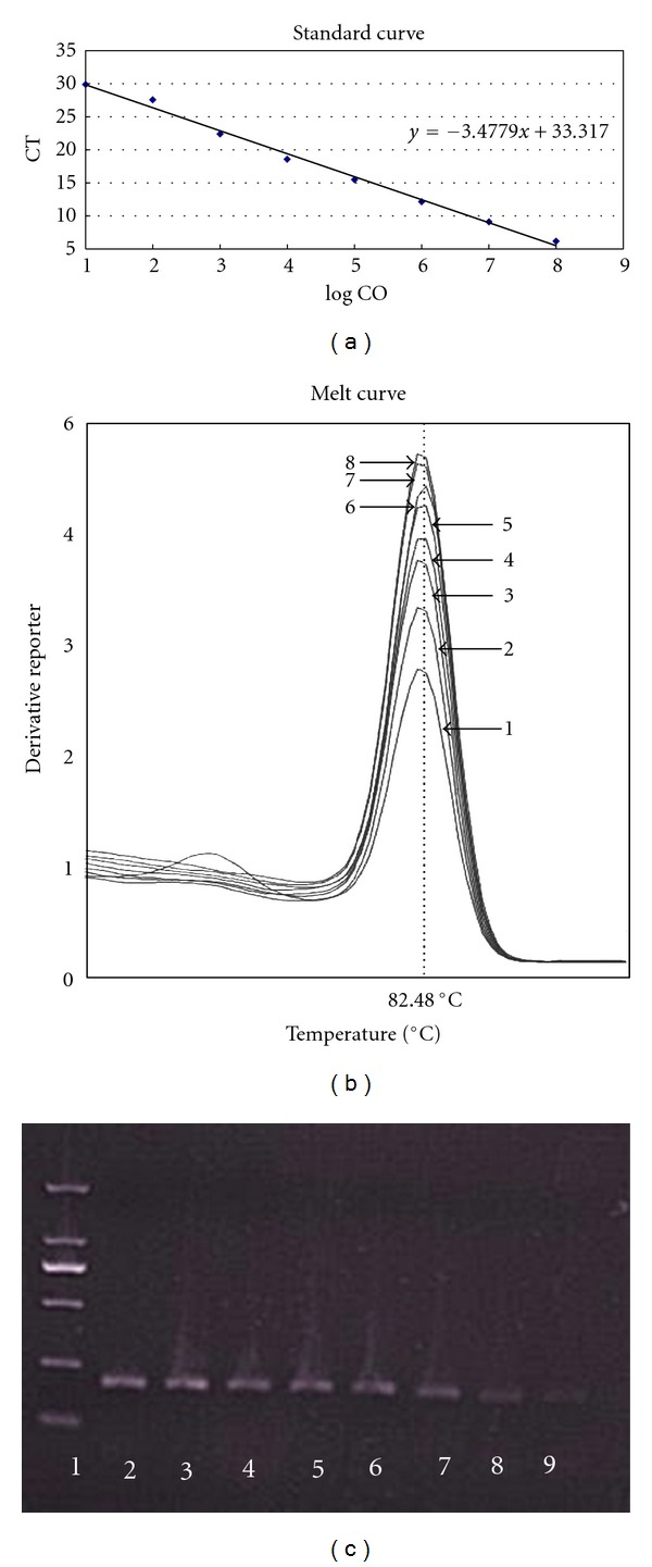 The sensitivity and specificity achieved with primer pair SZNP-F2/R2 in SYBR Green real-time PCR. (a) Standard curve. LogCO: log10 (copies), slope: −3.4779, R 2 : 0.998, eff%: 110%. (b) Melting curve. (c) Agarose electrophoresis of PCR products of H5N1. Lane 1: DL2000 Marker; Lanes 2–9: 10 8 –10 1 copies of H5N1 virus cDNA.