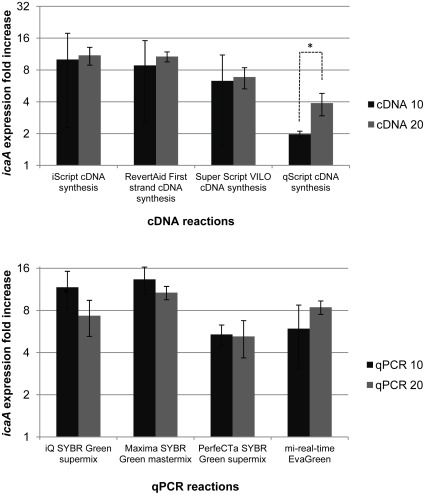 Variation in icaA gene expression quantification using different cDNA (top) or qPCR (botton) reaction volumes. TOP: cDNA, synthesized using 20 µL or 10 µL reaction volumes, was used for icaA transcripts quantification. The transcripts were detected using Maxima® SYBR Green Master Mix. BOTTOM: cDNA (1 100 dilution) synthesized using RevertAid™ First Strand cDNA synthesis kit (20 µL reaction) was used for icaA transcripts quantification by different qPCR master mixes and using different reaction volumes. The values represent the mean plus or minus standard deviation of 3 independent experiments. Statistical differences (*p