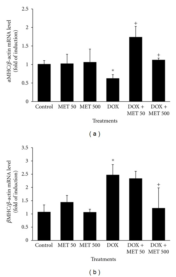 MET reverses DOX-mediated changes in the levels of cardiac hypertrophic genes. Rats ( n = 10/treatment type) received normal saline, DOX in a total cumulative dose of 18 mg/kg, MET (50 or 500 mg/kg, p.o., daily), or DOX plus either dose of MET. 24 h after receiving the last dose of DOX, total RNA was isolated from rat cardiac tissue using TRIzol methods and quantified spectrophotometrically at 260 nm. The mRNA levels of α -MHC (a) and β -MHC genes (b) were quantified using RT-PCR and normalized to β -actin housekeeping gene. Values represent mean of fold change ± SEM ( n = 10). * P