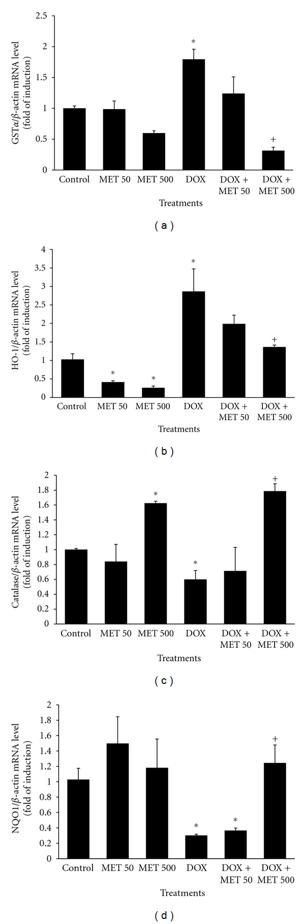 MET restores DOX-mediated changes in the levels of oxidative stress-related genes. Rats ( n = 10/treatment type) received normal saline, DOX in a total cumulative dose of 18 mg/kg, MET (50 or 500 mg/kg, p.o., daily), or DOX plus either dose of MET. 24 h after receiving the last dose of DOX, total RNA was isolated from rat cardiac tissue using TRIzol methods and quantified spectrophotometrically at 260 nm. The mRNA levels of GST α (a), HO-1 (b), CAT (c), and NQO1 (d) were quantified using RT-PCR and normalized to β -actin housekeeping gene. Values represent mean of fold change ± SEM ( n = 10). * P