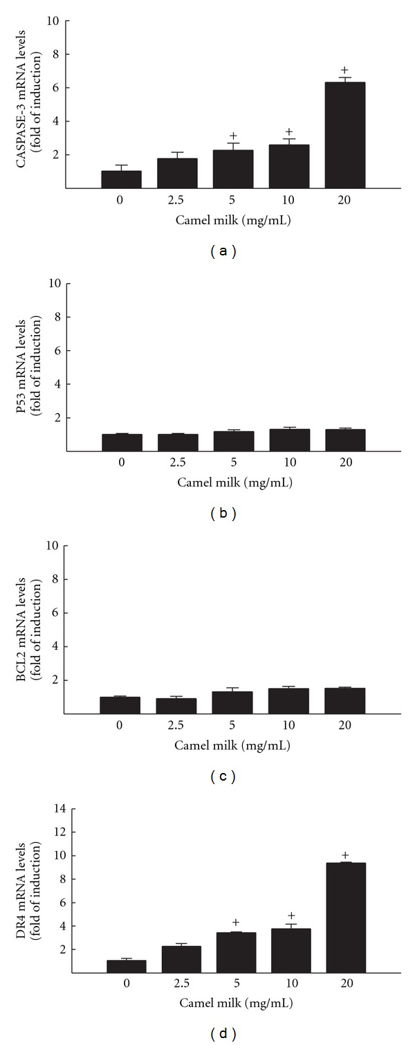 Effect of camel milk on apoptotic markers Caspase-3 (a), p53 (b), BcL2 (c), and DR4 (d) mRNA levels in HepG2 cells. HepG2 cells were treated for 6 h with a various concentrations of camel milk (2.5, 5, 10, and 20 mg/mL). Thereafter, total RNA was isolated using TRIzol reagent, and the mRNA levels of Caspase-3, p53, BcL2, and DR4 were quantified using RT-PCR normalized to β -actin housekeeping gene as described in Section 2 . Duplicate reactions were performed for each experiment, and the values presented are the means ± SEM ( n = 6) of three independent experiments. + P