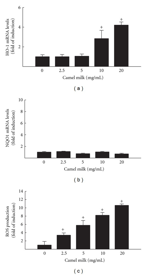 Effect of camel milk on oxidative stress markers HO-1 (a) and NQO1 (b) mRNA levels, and ROS (c) production in HepG2 cells. (a) and (b) HepG2 cells were treated for 6 h with a various concentrations of camel milk (2.5, 5, 10, and 20 mg/mL). Thereafter, total RNA was isolated using TRIzol reagent and the mRNA levels of HO-1 and NQO1 were quantified using RT-PCR normalized to β -actin housekeeping gene as described Section 2 . Duplicate reactions were performed for each experiment, and the values presented are the means ± SEM ( n = 6) of three independent experiments. + P