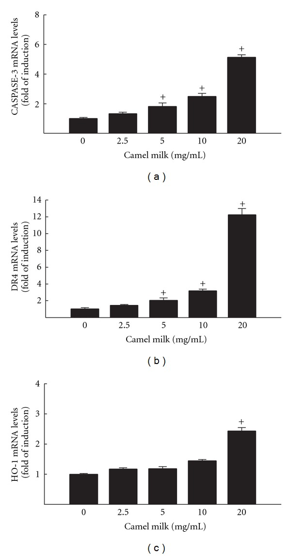 Effect of camel milk on apoptotic and oxidative stress markers Caspase-3 (a), DR4 (b), and HO-1 (c) mRNA levels in MCF7 cells. MCF7 cells were treated for 6 h with a various concentrations of camel milk (2.5, 5, 10, and 20 mg/mL). Thereafter, total RNA was isolated using TRIzol reagent and the mRNA levels of Caspase-3, DR4, and HO-1 were quantified using RT-PCR normalized to β -actin housekeeping gene as described Section 2 . Duplicate reactions were performed for each experiment, and the values presented are the means ± SEM ( n = 6) of three independent experiments. + P
