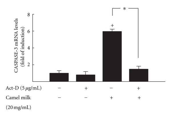 Effect of RNA synthesis inhibitor Act-D on the induction Caspase-3 activity by camel milk in HepG2 cells. HepG2 cells were treated with 5 μ g/mL Act-D, a RNA synthesis inhibitor, 30 min before exposure to camel milk (20 mg/mL) for additional 6 h. The amount of Caspase-3 mRNA was quantified using RT-PCR and normalized to β -actin housekeeping gene. Duplicate reactions were performed for each experiment, and the values presented are the means ± SEM ( n = 6) of three inv experiments. + P