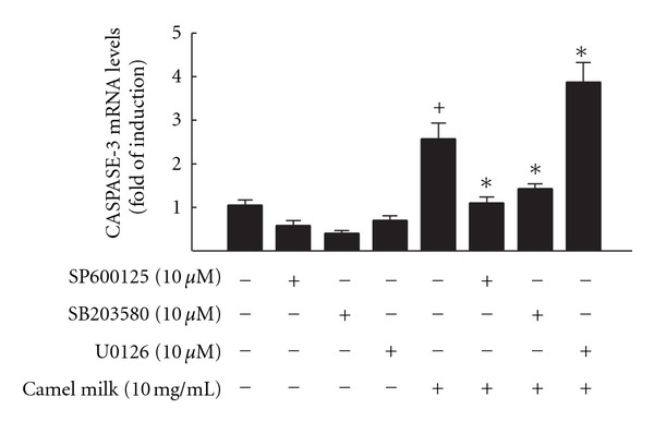 Effect of MAPKs inhibitors on camel milk mediated induction of caspase-3 mRNA levels in HepG2 cells. HepG2 cells were pre-treated with for 2 h with JNK inhibitor, SP600125, p38 inhibitor, SB203580, and ERK inhibitor, U0126, before the addition of camel milk (10 mg/mL) for additional 6 h. Thereafter, total RNA was isolated using TRIzol reagent and the mRNA levels of Caspase-3 were quantified using RT-PCR normalized to β -actin housekeeping gene as described Section 2 . Duplicate reactions were performed for each experiment, and the values presented are the means ± SEM ( n = 6) of three independent experiments. + P