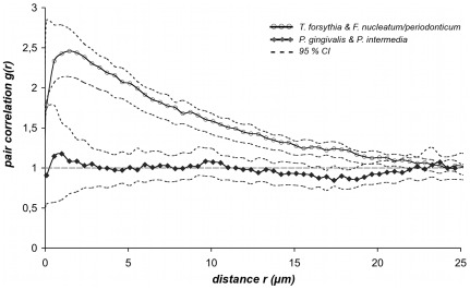 PCC curves of consolidated patient groups for T. forsythia versus F. nucleatum/periodonticum ( n = 8) and P. gingivalis versus P. intermedia ( n = 6). To compare the results of co-localization and randomness the patient group of each bacterial pair was merged by calculating the arithmetic mean curve with respective 95% CI by applying the equation 95% CI = m±1.96* SEM . The mean PCC curve for T. forsythia versus F. nucleatum/periodonticum (gray line, unfilled circles) and P. gingivalis /versus P. intermedia (black line, diamonds) were plotted with their respective 95% CI (dotted lines) against distances r in a range from 0–25 µm. The two curves were clearly distinguished from each other, by peak-levels and by convergence with the reference line. The fact that the lower CI of the co-localized bacteria was evidently separated from the upper CI of the randomly distributed pair of species within a wide range of 0–19 µm indicated a significant difference of both curves.
