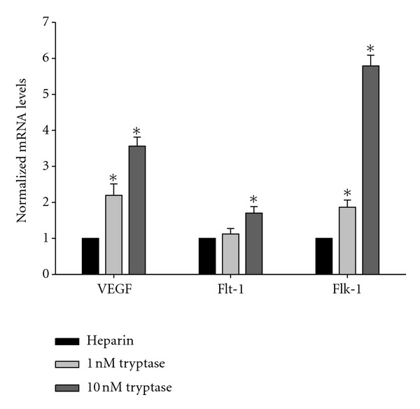 Effect of tryptase on the VEGF, Flt-1, and Flk-1 mRNA levels in HDMECs. Different concentrations of tryptase (0, 1, and 10 nmol/L) were added into HDMECs for 6 h. The mRNA levels of VEGF (a), Flt-1 (b), and Flk-1 (c) were determined by Real-time RT-PCR and normalized to GAPDH. The heparin control was also analyzed. * P
