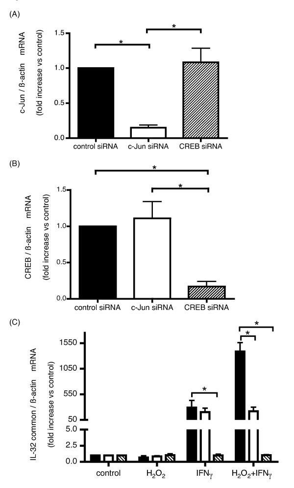 Knockdown efficiency of c-Jun and CREB mRNA and IL-32 expression induced by IFNγ and H 2 O 2 in HBE cells transfected with c-Jun or CREB siRNAs . c-Jun (A) and CREB (B) mRNA expression levels examined by quantitative real time PCR in HBE cells transfected with indicated siRNAs. Expression levels of c-Jun (A) and CREB (B) by each siRNA <t>transfection</t> were looked by quantitative real time PCR. IL-32 expression was examined by real time PCR in HBE cells transfected with control-siRNA, closed bars, c-Jun-siRNA, open bars, or CREB-siRNA, hatched bars, respectively. Then 48 hours after transfection, cells were stimulated with H 2 O 2 and/or IFNγ, followed by IL-32 quantitative real time PCR of RNA extracted 24 hours after the stimulation (C). The bars represent the means ± SE from 3 different individuals. *p