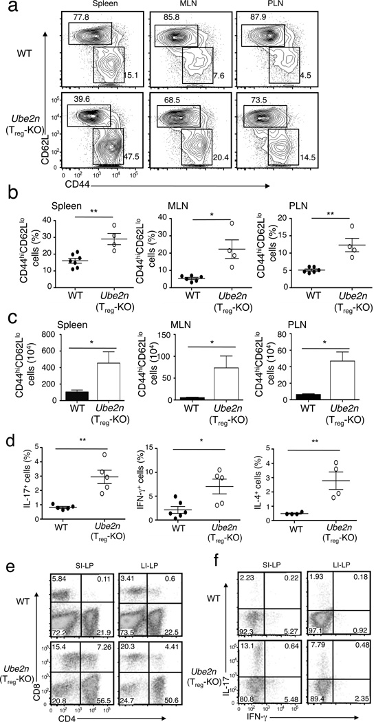 T reg -specific ablation of Ubc13 impairs T-cell homeostasis ( a ) Flow cytometric analysis of T cells derived from the indicated lymphoid organs of WT and Ube2n Treg-KO mice (8 weeks old), showing the percentage of naïve (CD44 lo CD62L hi ) and memory-like (CD44 hi CD62L lo ) CD4 + T cells. Data are representative of five experiments with three mice per group. ( b, c ) Summary (mean ± SD value) of the frequency ( b ) and absolute numbers ( c ) of memory-like CD4 + T cells in the indicated lymphoid organs of WT and Ube2n Treg-KO mice (8 weeks old), determined by flow cytometry. *p=0.05 and **p=0.01 (two-tailed unpaired t-test). ( d ) ICS measuring the frequency of IL-17-, IFN-γ, and IL-4-producing CD4 + T cells (gated on CD3 + CD4 + cells) within the spleen of WT and Ube2n Treg-KO mice (8–10 weeks old). *p=0.05 and **p=0.01 (two-tailed unpaired t-test). Data are representative of three independent experiments (each circle represents one mouse). ( e, f ) Flow cytometric analyses of CD4 + or CD8 + ( e ) and IL-17- and IFN-γ-producing CD4 + T cells ( f ) from small intestine lamina propria (SI-LP) and large intestine lamina propria (LI-LP) of WT and Ube2n Treg-KO mice (8 weeks old). Numbers in quadrants indicate percentage of cells. Data are representative of two experiments with three mice per group.