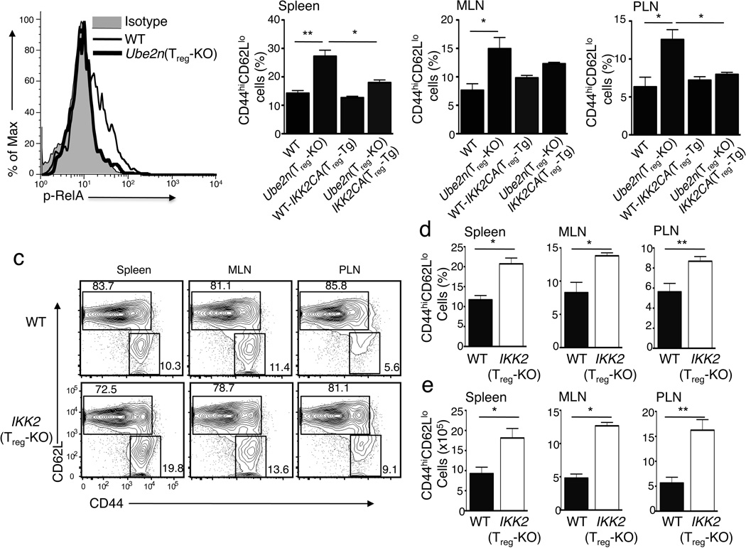 The T reg -specific function of Ubc13 involves its downstream target IKK ( a ) Flow cytometric analysis of RelA phosphorylation in sorted T reg cells from WT or Ube2n Treg-KO mice, stimulated with anti-CD3 and anti-CD28 for 15 min using a crosslinking method 45 . ( b ) Flow cytometric analysis of CD44 hi CD62L lo memory-like T cells (gated on CD3 + CD4 + cells) within different lymphoid organs of the indicated mice (6–8 weeks old). Data are presented as mean ± SD value and representative of three independent experiments. *p=0.05 and **p=0.01 (two-tailed unpaired t-test). ( c ) Flow cytometric analysis of CD4 + T cells derived from the indicated lymphoid organs of WT or IKK2 Treg-KO mice (7 weeks old), measuring the percentage (numbers in quadrangles) of naïve (CD44 lo CD62L hi ) and memory-like (CD44 hi CD62L lo ) T cells. Data are representative of three experiments. ( d, e ) Flow cytometric analysis of the frequency ( d ) and absolute number ( e ) of CD44 hi CD62 lo memory-like CD4 + T cells in the indicated lymphoid organs of WT and IKK2 Treg-KO littermates (7 weeks old). Data are representative of two independent experiments.