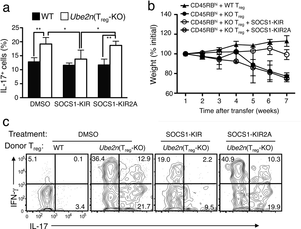 A SOCS1 mimetic peptide partially rescues the functional defect of Ubc13-deficient T reg cells both in vitro and in vivo ( a ) Flow cytometry measuring the frequency of IL-17-producting cells in sorted YFP + CD4 + T reg cells derived from WT-R26 YFP and Ube2n Treg-KO R26 YFP mice, activated under T H 17 polarizing conditions in the presence of DMSO, the SOCS1 mimetic peptide SOCS1-KIR, or the negative control peptide SOCS1-KIR2A. *p=0.05, **p=0.01 (two-tailed unpaired t-test). Data are representative of two independent experiments. ( b,c ) Disease phenotypes of Rag1 KO mice (5 weeks old) adoptively transferred with WT CD45.1 + CD4 + CD25 − CD45RB hi naïve T cells together with CD4 + YFP + T reg cells purified from WT-R26 YFP or Ube2n Treg-KO R26 YFP mice (6 weeks old). The recipient mice were either not treated or injected (i.p.) with SOCS1-KIR or SOCS1-KIR2A every other day. Bodyweight of recipient mice was measured at different times and presented as percentage of initial weight ( b ), and the frequency of IL-17 + or IFN-γ + cells among the transferred CD4 + YFP + T reg cells was determined by flow cytometry (gated on CD45.2 + cells) after 7 weeks of transfer ( c ).