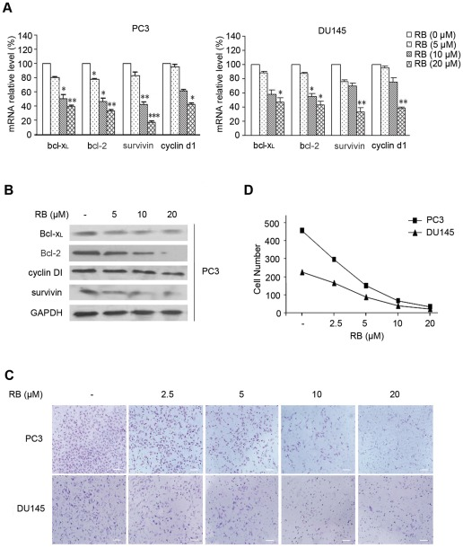 The effects of RB on function of NF-κB-dependent gene expresion and cell invasion in vitro . (A) RB dosage-dependently inhibited the mRNA expression of Bcl-x L , Bcl-2, survivin, and cyclin D1 as analyzed by QRT-PCR. GAPDH was used for normalization. Results are the mean ± SD of three independent experiments, each performed in triplicate. p