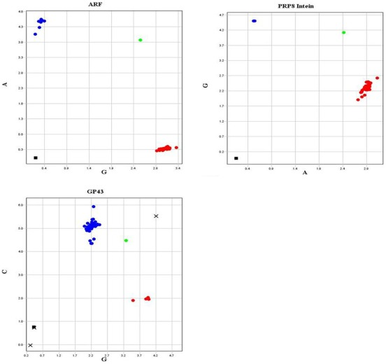 """Real Time PCR with TaqMan probes for SNP detection in isolates belonging to the different species from Paracoccidioides genus. Endpoint fluorescence intensity graphics for: SNP3- ARF (G for S1, PS3 and P. lutzii isolates, and A for PS2 isolates), SNP4- GP43, exon 2 (G for S1, PS2 and P. lutzii , and C for PS3) and SNP5-PRP8 intein (A for S1, PS2 and PS3, and G for P. lutzii ). Green dots: """"heterozygote"""" additional controls, using two different DNA samples together; black squares: negative controls;""""X"""": undetermined samples."""