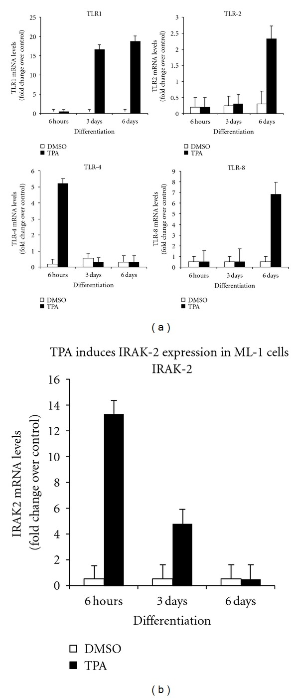 Expression of TLR mRNA expression in ML-1 cells. Six million cells were incubated in the presence TPA of (5 nM) or vehicle (DMSO) for indicated times. Total RNAs were extracted from cell samples using Trizol reagents, purified with the <t>Qiagen</t> <t>RNAeasy</t> mini kit and analyzed by microarray analysis using human Genome U133 2.0 PlusArray Chip. Six replicates including three controls (DMSO-treated) and three TPA-treated ML-1 cells samples were examined. The levels of (a) TLR1, TLR2, TLR4 and TLR8 and (b) IRAK-2 mRNAs were determined by examination of the microarray analysis data.