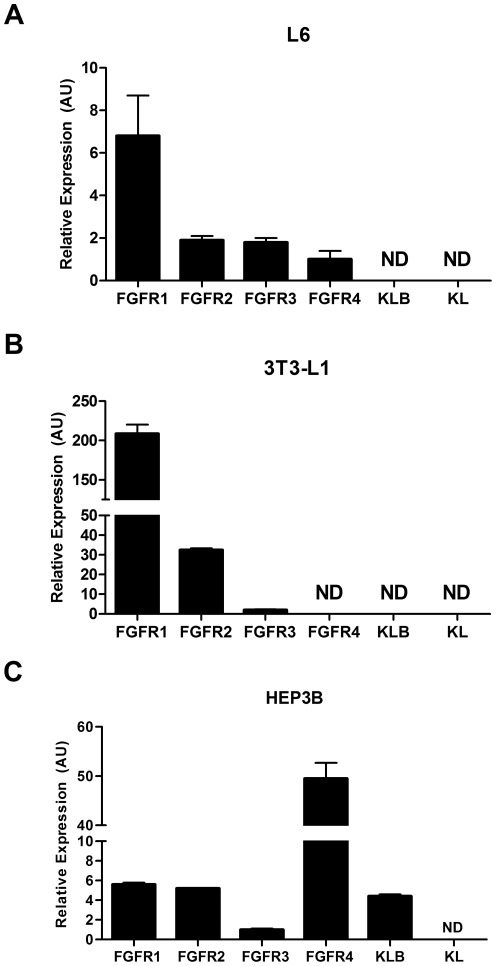 Expression of FGF receptors and Klotho co factors in cell culture models. In 3T3-L1 cells we found a high level of FGFR1 expression along with modest levels of FGFR2 and FGFR3. In these cells <t>FGFR4,</t> KL and KLB were not detectable (A). In Hep3B cells there was detectable expression of all 4 FGF receptor subtypes, however, we detected especially high levels of FGFR4. Hep3B cells were also found have appreciable expression of KLB while KL was not detectable (B). In L6 cells expression of all FGFRs was extremely low in comparison to other cells lines we screened in addition to undetectable levels of KLB at baseline (C).