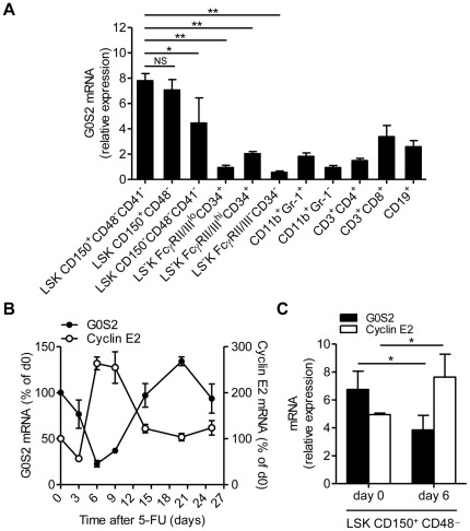 G0S2 is expressed in dormant hematopoietic stem cells. (A) G0S2 transcripts were measured by quantitative real-time PCR in bone marrow hematopoietic stem and progenitor cells based on SLAM markers and mature myeloid and lymphoid cells purified from the spleen ( n = 3). Statistical significance is indicated between HSCs and progenitor cells (MPP, CMP, GMP, MEP). (B) Expression of G0S2 and cyclin E2 in BM cells isolated at different times after administration of a single dose of 5-FU in C57BL/6 mice. The relative expression levels of G0S2 and cyclin E2 are shown as percentages of basal levels ( n = 3–4). (C) Transcript levels of G0S2 and cyclin E2 were measured in LSK CD150 + CD48 − cells purified from untreated or 5-FU-treated (day 6) mice ( n = 3). The data represent the mean and standard deviation of each experiment. *, P