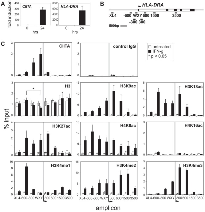 IFN-γ treatment induced the deposition of active histone modifications throughout the HLA-DRA gene. (A) RNA levels for CIITA and HLA-DRA were measured by <t>qRT-PCR.</t> Transcript levels for A431 cells are shown before and after treatment with 500 U/ml of IFN-γ for 24 hrs. The results of three independent experiments were averaged and plotted with standard error. (B) A schematic of the HLA-DRA gene and open reading frame is illustrated with exons (black boxes) and introns (clear) indicated. The bars below the gene represent the relative position of the PCR amplicons used. (C) ChIP and <t>qPCR</t> were conducted on untreated control (clear) or 24 hrs IFN-γ treated (black) A431 cells using the indicated antisera and amplicons described in B. The data are presented as an average of the percent input value derived from three to four biological replicates and error bars represent standard error. For unmodified histone H3, the asterisk (*) indicates a Student's t-test value of p