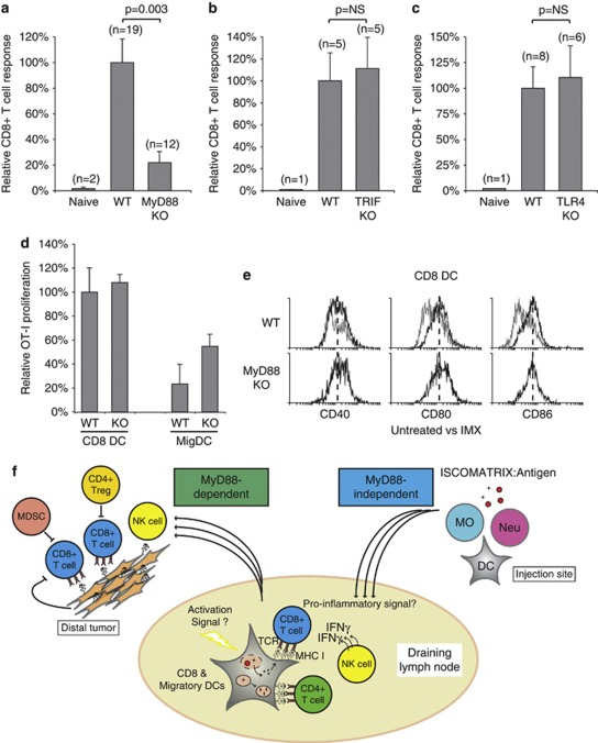 ISCOMATRIX vaccines are dependent on a MyD88-signaling axis in vivo ( a ) CD8 + T-cell responses were compared in wild type (WT) and MyD88-deficient mice (MyD88 KO) vaccinated with an ISCOMATRIX vaccine on day −7, 0, with the magnitude of the CD8 + T-cell response shown relative to WT mice. ( b , c ) Same as in ( a ) except the CD8 + T-cell response was evaluated in TRIF or TLR4-deficient mice. ( d ) Purified CD8 and MigDCs from wild type or MyD88-deficient (KO) mice were isolated from the DLN 24 h after vaccine administration. MHC class I cross-presentation was assessed by co-culturing each population with 5 × 10 4 CFSE-labeled OT-1 cells and quantifying proliferation 60 h later, as described. ( e ) CD40, CD80 and CD86 expression (black lines) was assessed for CD8 DCs isolated from the DLN of WT or MyD88 KO mice dosed with ISCOMARTIX adjuvant, compared with CD8 DCs from untreated WT mice (gray lines). Dashed lines illustrate the median fluorescence for each marker. ( f ) Schematic illustrating the interaction between DCs, T cells and NK cells in the DLN following ISCOMATRIX vaccine delivery. ISCOMATRIX vaccines initiate a localized inflammatory response at the subcutaneous injection site, and efficient DC activation and MHC class I cross-presentation in the DLN (MyD88-independent). Although the precise DC activation signal(s) is currently unknown, a distinct pro-inflammatory milieu was detected locally and systemically following ISCOMATIRX adjuvant administration. In the DLN, NK cell activation and CD8 + T-cell cross-priming was dependent on DCs, as well as an intact MyD88 signaling network. Cross-primed CD8 + T cells exhibit potent antitumor activity in prophylactic tumor challenge models. However, in the case of pre-established tumor burden, the effectiveness of the vaccine is likely to be blunted by immune suppressive networks, such as myeloid-derived suppressor cells (MDSC), regulatory T cells (Treg) and tumor-derived factors that prevent complete tumor eradica