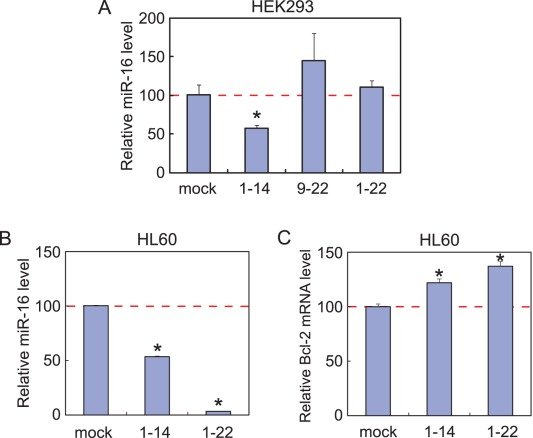 Reduction in the miR-16 level by a naked 14-nt sgRNA. (A) Quantitation of the miR-16 level in HEK293 cells with a <t>StepOne</t> Real Time <t>PCR</t> System. Total RNA was extracted from the HEK293 cells that were cultured for 24 hours in the absence or presence of sgR16(1–14), sgR16(9–22), or sgR16(1–22), which was phosphorylated at the 5′ end but not at the 3′ end. The miR-16 levels are normalized against the RNU48 levels. Error bars indicate s.d. (n = 3). *, P