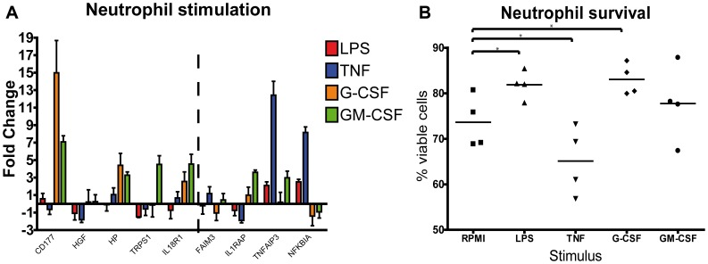 Ex vivo neutrophil stimulation. A Gene expression in in vitro stimulated neutrophils. Cells were stimulated with 10 ng LPS, 10 ng rTNFα, 50 ng rG-CSF or 50 ng rGM-CSF. At t = 2 h after stimulation RNA was isolated and q-pcr was performed with taqman probes for specific genes. Fold change relative to unstimulated. Error bars represent SEM (N = 4). B Survival after stimulation with 10 ng LPS, 10 ng rTNFα, 50 ng rG-CSF or 50 ng rGM-CSF. Cell viability was determined in ≥1×10 5 cells with Annexin V apoptosis detection kit at 7 hours after stimulation. Dots represent the percentage of viable (Annexin V negative and 7 AAD negative) cells. N = 4 *p