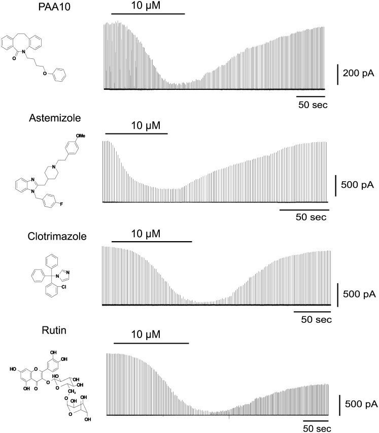 Time course of the effect of PAA-10, astemizole, clotrimazole, and rutin on the junctional currents of Cx50 channels expressed in N2A cell pairs measured by dual whole-cell patch-clamp .