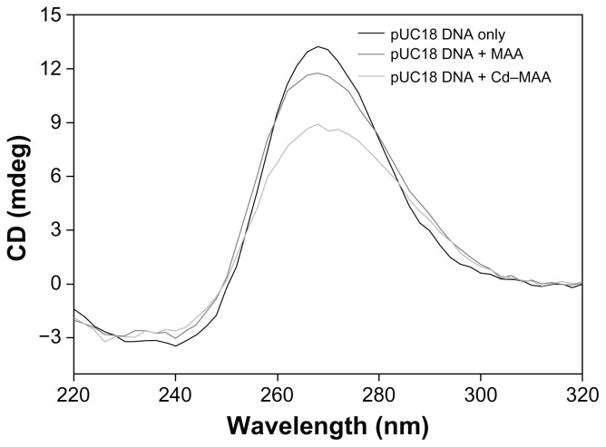 CD spectra of pUC18 DNA. Notes: The interactions of pUC18 DNA with MAA and Cd–MAA were at a ratio of compound:DNA = 0.4. All the spectra were recorded in Tris-HCl buffer, pH 7.0. Abbreviations: CD, circular dichroism; MAA, mercaptoacetic acid; Cd-MAA, cadmium-mercaptoacetic acid.