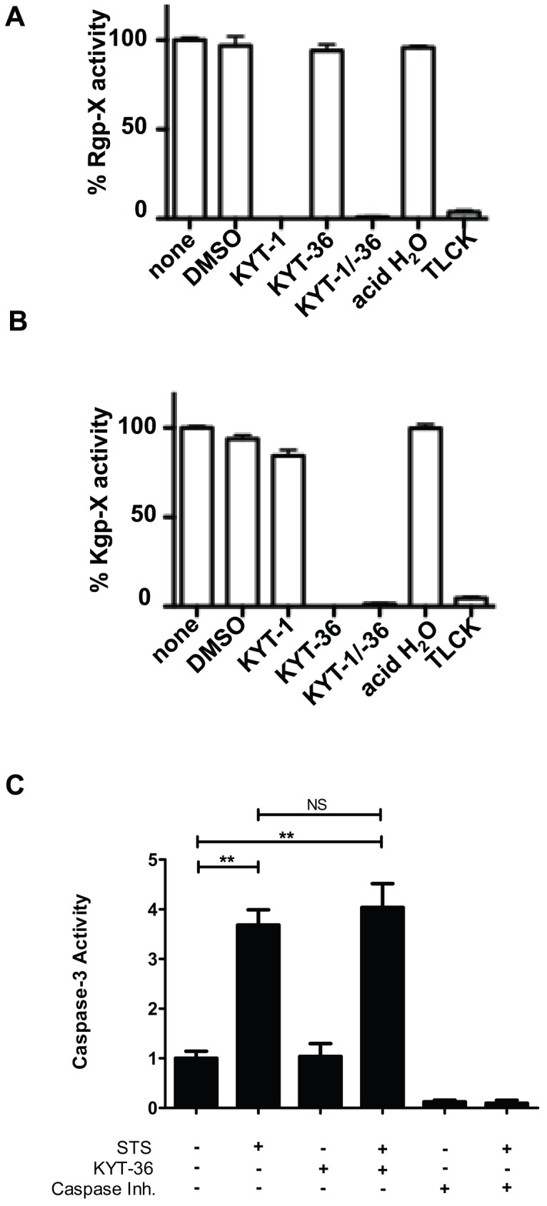 KYT inhibitors specifically inhibit P. gingivalis gingipain activity and do not alter host 3 caspase activity. Effect of gingipain inhibitors on P. gingivalis A ) Rgp or B ) Kgp protease activity. P. gingivalis was untreated (none) or pretreated with 10 µM Rgp-specific inhibitor KYT-1, 10 µM Kgp-specific inhibitor KYT-36, 10 µM KYT-1 and 10 µM KYT-36, 1 mM TLCK, or vehicle controls (DMSO or acid water) for 10 min and monitored for arginine-X-specific or lysine-X-specific protease activity. Effect of inhibitors on P. gingivalis is presented as percent Rgp-X activity or Kgp-X activity relative to untreated P. gingivalis . C ) HUVEC were untreated or treated with 2 µM staurosporine (STS) for 5 h. Whole cell lysates were analyzed for caspase-3 activity in the presence of KYT-36 gingipain inhibitor (3 µM). Activity is represented as fold change relative to untreated. A reversible caspase inhibitor was included to demonstrate observed fluorescence is specific to caspase-3 like proteases. Statistical analysis was performed using unpaired T-test (α = 0.05), **p