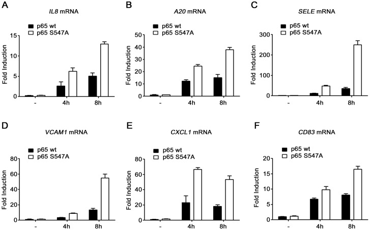 Higher expression of specific genes in cells expressing S547A mutated p65. qRT PCR analysis of IL8 ( A ), A20 ( B ), Sele ( C ), VCAM1 ( D ), CXCL1 ( E ) and CD83 ( F ) mRNA level after 4 and 8 hours of etoposide treatment in <t>HEK-293</t> cells expressing either p65 wt or p65 S547A .