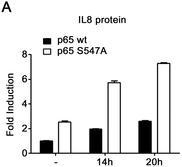 Higher IL8 protein level in cells expressing S547A mutated p65. ELISA analysis of IL8 protein level after the indicated times of etoposide treatment in HEK-293 cells expressing either p65 wt or p65 S547A .