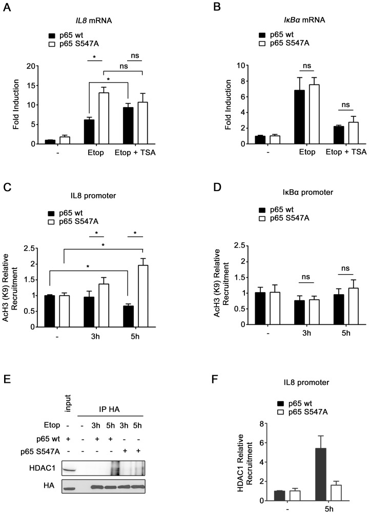 Ser 547 phosphorylation–dependent IL8 gene regulation mechanism involve HDAC. ( A–B ) HEK-293 expressing either p65 wt or p65 S547A were non-treated or treated 4 hours with etoposide in absence or presence of TSA, and mRNA levels of IL8 ( A ) and IκBα ( B ) were analyzed by qRT PCR. ( C–D ) Recruitments of Lys 9 acetylated histone 3 on IL8 ( C ) and IκBα ( D ) promoters were measured by ChIP assay in HEK-293 cells expressing either p65 wt or p65 S547A , and treated with etoposide for the indicated periods. ( E ) HA-tagged p65 wt or p65 S547A were immunoprecipitated from lysates of HEK-293 cell transfected with expression plasmid for these two proteins or non transfected as control. Co-immunoprecipitated HDAC1 protein was detected by western blotting (upper panel). Level of immunoprecipitated HA-p65 in the different samples was determined by western blotting (lower panel). A portion of whole cell extract was added on the gel as input. ( F ) Recruitment of HDAC1 on IL8 promoter was measured by ChIP assay in HEK-293 cells expressing either p65 wt or p65 S547A , and treated 5 hours with etoposide or left untreated. *, significantly different (P