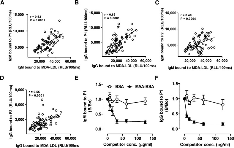 Mimotopes are recognized by human autoAbs and mimic MDA-LDL. (A–D) Correlation of mimotope and MDA-LDL-specific Ab titers in human plasma. Plasma of middle-aged healthy volunteers (n = 18) was obtained in a previous study ( 35 ) and Ab titers to P1, P2, and MDA-LDL were measured at 1:400 dilution by chemiluminescent ELISA as described in Materials and Methods. Correlation of IgM titers to MDA-LDL with IgM titers to P1 (A) and P2 (C). Correlation of IgG titer to MDA-LDL with IgG titers to P1 (B) and P2 (D). Values are given as relative light units (RLU) per 100 ms and represent the mean of triplicate determinations. Data points represent measurements of titers obtained from each of the 18 subjects at four different times: 0, 30, 120, and 210 days. Correlations were calculated by analyzing all data from all subjects using nonparametric Spearman's rank correlation ( r = Spearman rank correlation coefficient). (E, F) Immunocompetition assays for specificity of IgG and IgM Abs to P1. Pooled human plasma was diluted 1:1,000 and incubated with or without increasing concentrations of BSA or MAA-BSA. Subsequently, samples were pelleted and binding of IgM (E) and IgG (F) Abs to coated P1 was determined in supernatants. Data are expressed as B/B 0 and represent the mean ± SD of triplicate determinations.