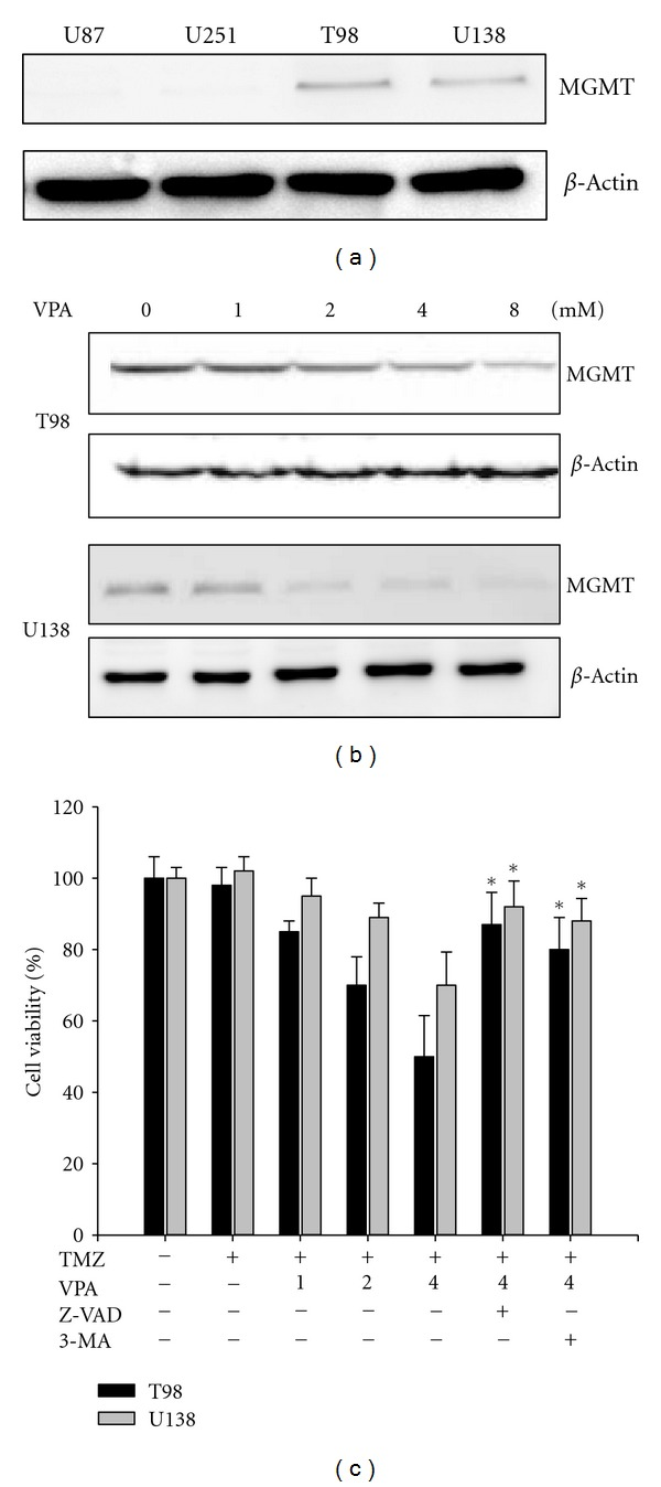 Effect of VPA on the expression of MGMT in TMZ-resistant glioma cells. (a) Cell lysates of four human glioma cell lines were subjected to western blotting using an anti-MGMT antibody. This revealed an absence of MGMT expression in the U87 and U251 cell lines. In contrast, the other two cell lines, T98 and U138, exhibited MGMT expression at the protein level. (b) MGMT expression in the T98 and U138 TMZ-resistant cells treated with varying concentrations of VPA (0–8 mM).  β -Actin was used as a loading control. (c) Cells were exposed to medium containing various concentrations of VPA (0–4 mM) with 50 μ M TMZ for 72 h and were measured using MTT assay. Columns, mean; bars, SE. * P