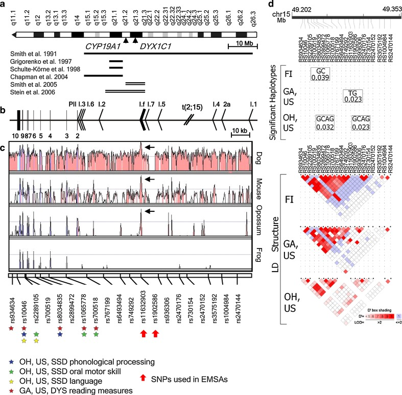 The CYP19A1 locus on 15q21.2. a An overall map of chromosome 15q shows the relative positions of CYP19A1 , DYX1C1 and the linkage peaks in different studies of dyslexia ( solid lines ) and SSD ( double lines ). b CYP19A1 gene organization, including coding exons ( vertical bars ), promoter regions ( arrowheads ), and the translocation t(2;15)(p12;q21) breakpoint ( slash ). The brain-specific exon/promoter I.f is highlighted with a thicker arrowhead . The gene is located on the reverse strand and therefore is drawn from right (5′) to left (3′). c An evolutionary comparison of the CYP19A1 genomic sequence across four species (dog, mouse, opossum and frog) shows the highest conservation for the brain-specific exon/promoter I.f. The 20 SNPs genotyped in this study are positioned along the gene on the lowest part of the evolutionary sequence comparison. The two SNPs flanking I.f and used in EMSA experiments are indicated by thick red arrows . Colored stars under SNPs are indicating a significantly associated QT to the corresponding marker. In the OH, US, SSD cohort, association to QTs such as phonological processing, oral motor skills and language, is marked with blue , green and yellow stars , respectively. Red stars indicate association to reading measures detected in the GA, US, DYS cohort. d Haplotypes associated with dyslexia as a categorical trait in three of the cohorts and the respective LD structures