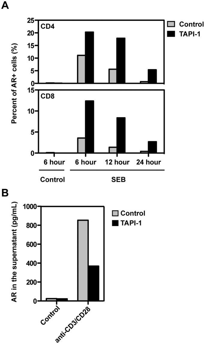 Release of AR from the T cell surface was blocked by the ADAM17 inhibitor TAPI-1. (A) PBMC were stimulated with SEB in the presence or absence of TAPI-1 for variable times. After cell surface staining of AR, the percentage of CD69+AR+ cells within CD4 and CD8 T cells was analyzed. (B) Purified CD4 T cells were treated with medium alone or anti-CD3/CD28 beads with or without TAPI-1 for 24 hours. The concentration of AR in the supernatant was measured by ELISA. All results are representative of at least three experiments.