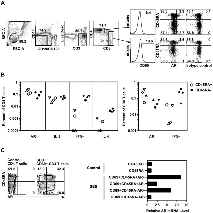 Both naïve and memory human CD4 T cells expressed AR during TCR activation. (A) PBMC were treated with medium alone or allogeneic EBV-transformed B cells for 10 hours and analyzed by ICS. The gating strategy to identify activated CD4+ and CD8+ T cells is shown. (B) AR, IL-2, IFNγ or IL-4 expression was measured in four subjects in CD45RA+ (open) and CD45RA- (solid) CD4+ and CD8+ T cells after allogeneic EBV-transformed B cell stimulation. Background values have been subtracted. (C) PBMC were treated with medium alone or SEB in the presence of TAPI-1 for 8 hours. Then six populations were sorted based on surface AR, CD69 and CD45RA expression (left). AR mRNA in each population was measured by RT-PCR (right). Results in (A) and (B) represent at least three experiments, (C) represents two experiments.