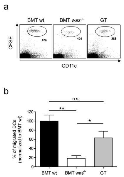 Amelioration of in vivo migration of BMDCs of GT mice. ( a ) 0.5-2×10 6 CFSE-labeled BMDCs from BMT wt, BMT was −/− and GT mice were injected into the footpad of C57BL/6 wt mice. Single cell suspensions of popliteal LNs were stained for CD11c and analyzed by flow cytometry. Numbers represent CFSE + /CD11c + cells, gated on live cells. ( b ) Numbers of BMT wt, BMT was −/− and GT migrated DCs were normalized to BMT wt migrated DCs and expressed as percentage. BMT wt (black); BMT was −/− (white); GT mice (gray). Bars represent the means + SEM of three different experiments with three mice per group (n.s., not significant; *p