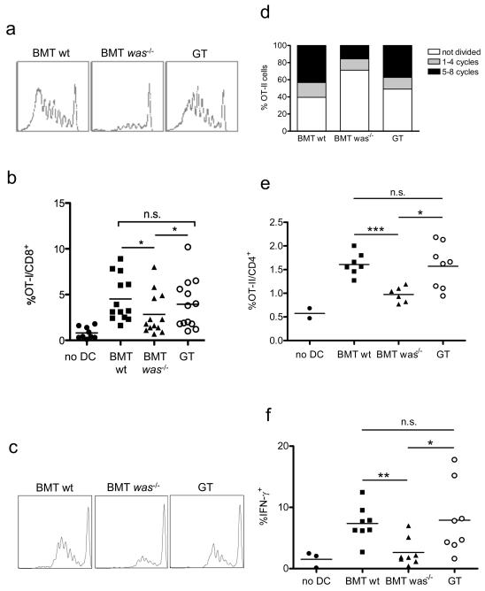BMDCs of GT mice rescue T cell priming capacity. ( a-b ) Five ×10 5 BMDCs of BMT wt, BMT was −/− or GT mice were loaded with 0.05 nM of SIINFEKL OVA peptide and injected subcutaneously in C57BL/6 (CD45.2) wt recipient mice that had been transferred with 1.5×10 6 CFSE-labeled OT-I/CD45.1 cells 24 hours before. Draining LNs were collected 3 days after and T cell proliferation was analyzed by flow cytometry. ( a ) Representative histograms showing CFSE dilution profile of transferred OT-I cells, gated on CD8 + /CD45.1 + live cells. ( b ) Quantification of T cell expansion expressed as percentage of OT-I cells over the total CD8 + T cell population. Each symbol represents an individual mouse; horizontal lines indicate mean values. ( c-e ) Five ×10 5 BMDCs of BMT wt, BMT was −/− or GT mice were loaded with OVA (150 μg/ml) and injected subcutaneously in C57BL/6 (CD45.1) wt recipient mice that had been transferred with 1.5×10 6 CFSE-labeled OT-II/CD45.2 cells 24 hours before. Draining LNs were collected 3 days later and T cell proliferation and intracellular IFN-γ production was analyzed by flow cytometry. ( c ) Representative histograms showing CFSE dilution profile of transferred OT-II cells, gated on CD4 + /CD45.2 + live cells. ( d ) Data obtained from the analysis of CFSE dilution were expressed as the percentage of OT-II cells that remain undivided, that divided one to four times, or that divided five to eight times. ( e ) Quantification of T cell expansion expressed as percentage of OT-II cells over the total CD4 + T cell population. ( f ) Percentage of IFN-γ expressing OT-II cells, evaluated by flow cytometry. Each symbol represents an individual mouse; horizontal lines indicate mean values (n.s., not significant; *p