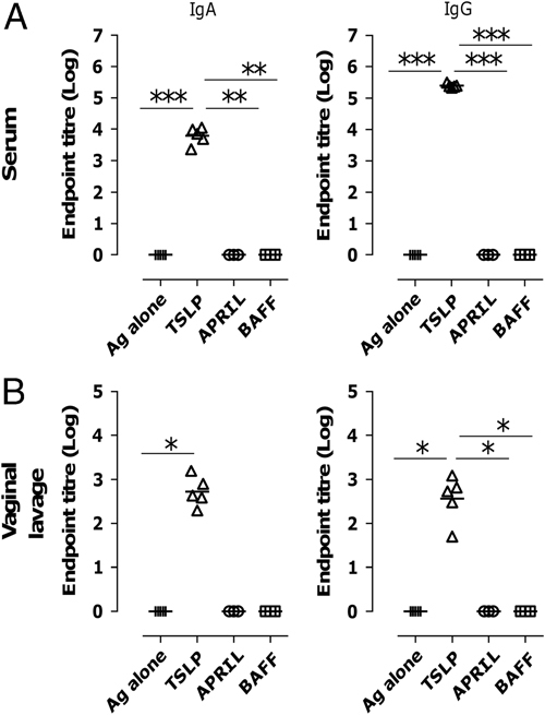 TSLP induces gp140-specific immune responses after intranasal immunisation. Mice were immunised with 10 μg gp140 in the presence or absence of 5 μg TSLP, APRIL or BAFF i.n. three times at 3 week intervals. Anti-gp140 IgA (left) and IgG (right) were measured 3 weeks after the final immunisation by ELISA in (A) serum and (B) vaginal lavage. Data are shown as endpoint titres, with lines representing geometric means of n =5 mice; data are representative of two experiments. * p
