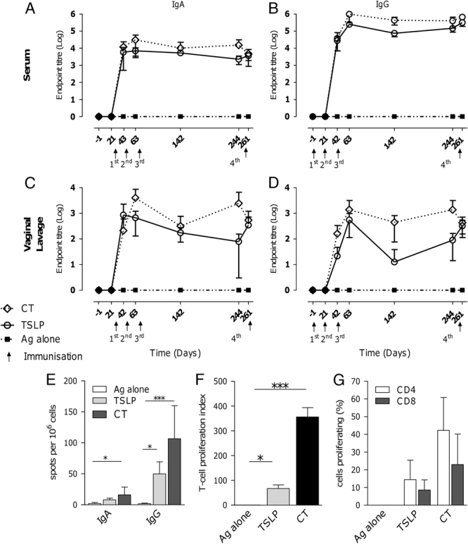TSLP induces sustained humoral and cellular immune responses to gp140. Mice were immunised four times i.n. with 10 μg gp140 alone (▪) or with 5 μg TSLP (○) or CT (◊). The fourth immunisation was given 6 months after the third immunisation. Anti-gp140 IgA and IgG were measured by ELISA in (A, B) serum and (C, D) vaginal lavage before every immunisation and 3 weeks after the final immunisation. (E) CN54 gp140 IgA and IgG ASC were measured by B-cell ELISPOT in spleens from mice 3 weeks after the final immunisation. Antigen-specific T-cell proliferation of splenocytes was assessed after in vitro stimulation with gp140 after 120 h using (F) 3 H-thymidine and (G) CFSE dilution. Data are shown as mean of n =5 mice+SD, experiment was performed once. * p
