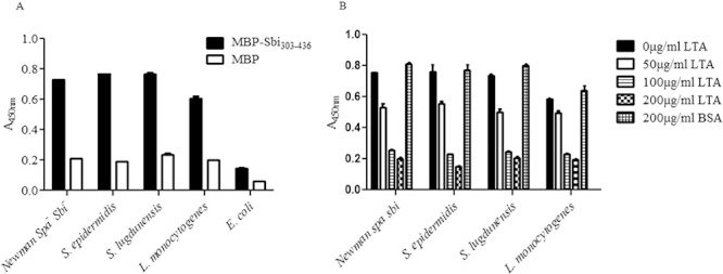 Binding of MBP–Sbi 303–436 to the cytoplasmic membranes of Gram-positive bacteria. A. Cytoplasmic membrane material purified from S. aureus , S. epidermidis , S. lugdunensis , L. monocytogenes and E. coli were incubated with MBP–Sbi 303–436 and MBP in microtitre plates. Recombinant protein binding was detected with HRP-conjugated anti-MBP IgG. B. Recombinant MBP–Sbi 303–436 was pre-incubated with increasing concentrations of either S. aureus LTA or bovine serum, albumin (BSA) (0–200 µg ml −1 ) before being added to cytoplasmic membrane-coated microtitre plates. Recombinant protein binding was detected with HRP-conjugated anti-MBP IgG. Each assay was preformed n = 3 times with similar results. The graphs shown are representatives of one experiment with each plot in the graph representing the average of duplicate wells.