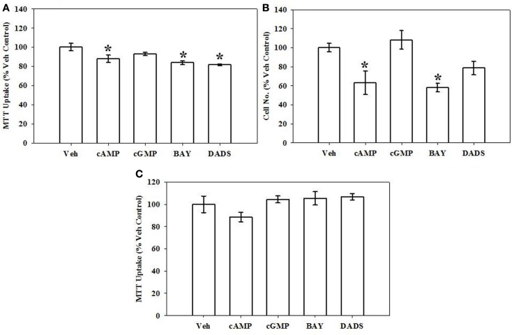 Effects of cyclic nucleotide or Cx43 stimulation on VSMC proliferation . (A) In rat primary VSMCs in the presence of 10% serum for 72 h and using the MTT assay, 8Br-cAMP (100 μM), the sGC stimulator BAY (100 nM) or the garlic-derived Cx inducer DADS (50 μM) significantly reduced rat primary VSMC numbers compared with vehicle controls. Data are mean ± SEM with an n = 6. (B) Using hemocytometry after 72 h, both 8Br-cAMP and BAY significantly reduced cell numbers by ∼40%, and the presence of DADS reduced cell numbers by ∼20% ( p = 0.06). Data are mean ± SEM of two independent experiments each with n = 3–4. (C) MTT assay performed on VSMCs after 12 h shows no observable changes in any treatment group. Student–Newman–Keuls method for multiple comparisons following one-way ANOVA was used. * p